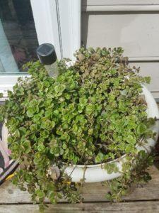 How My Garden Grows?