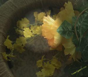 Yellow Flowers Focus
